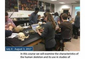 ANTH S464 Human Osteology